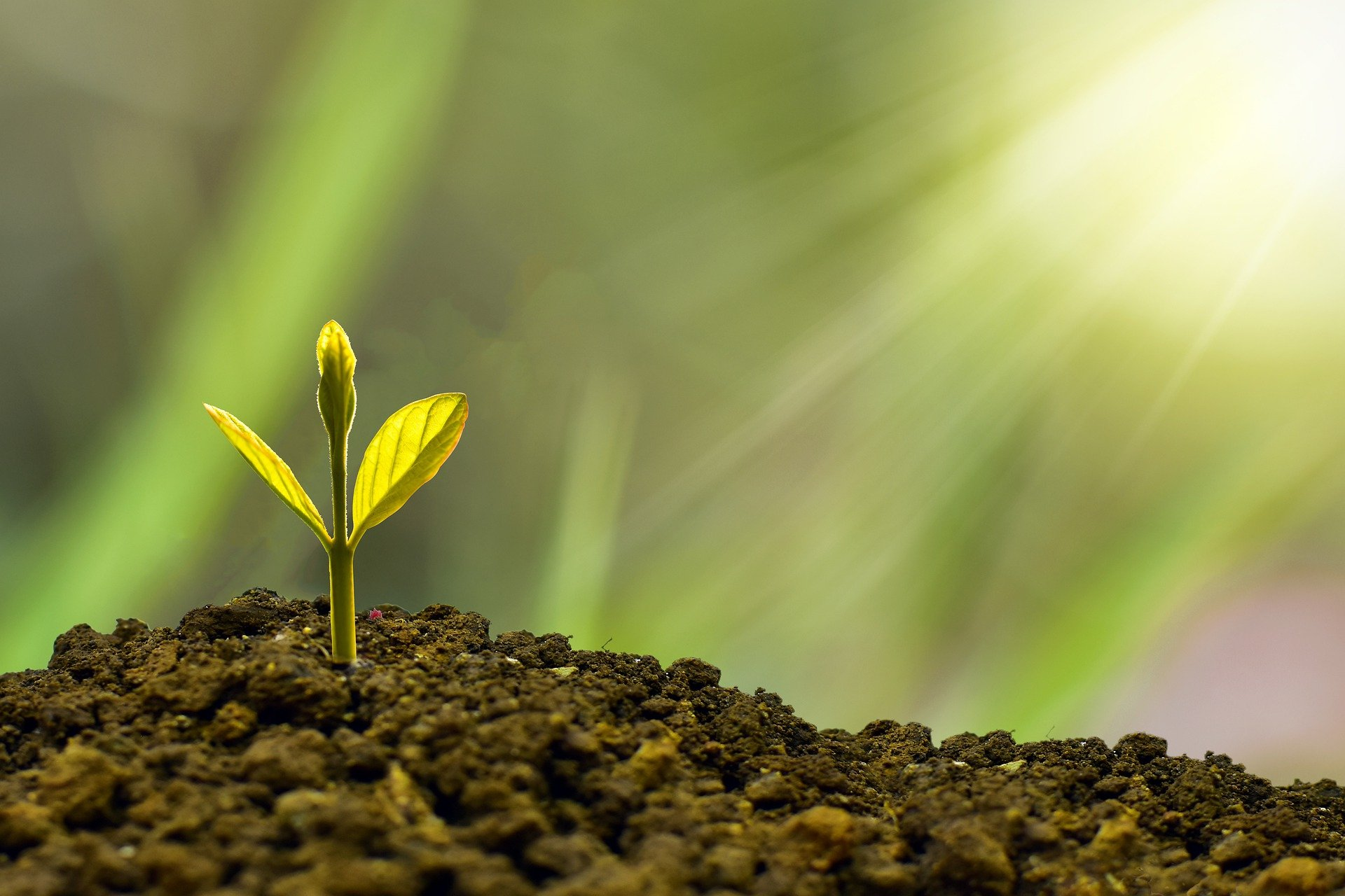 Duurzame groei All-Inn Verspreidingen
